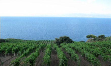 Malvasia delle Lipari doc, il concentrato di sole di Paola Lantieri