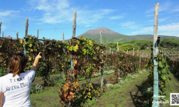 Terre di Sylva Mala: Vigne tra mare e vulcano nel bosco dei briganti